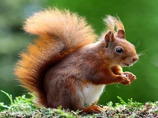squirrel-animal-cute-rodents